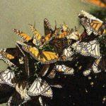 Irremplaçables – la biodiversité dont nous dépendons