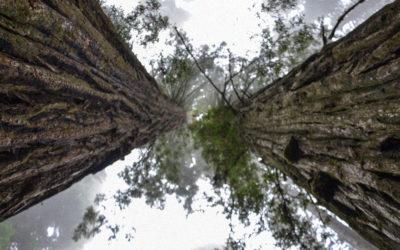Renouer un lien sacré avec la nature : leçons des peuples autochtones